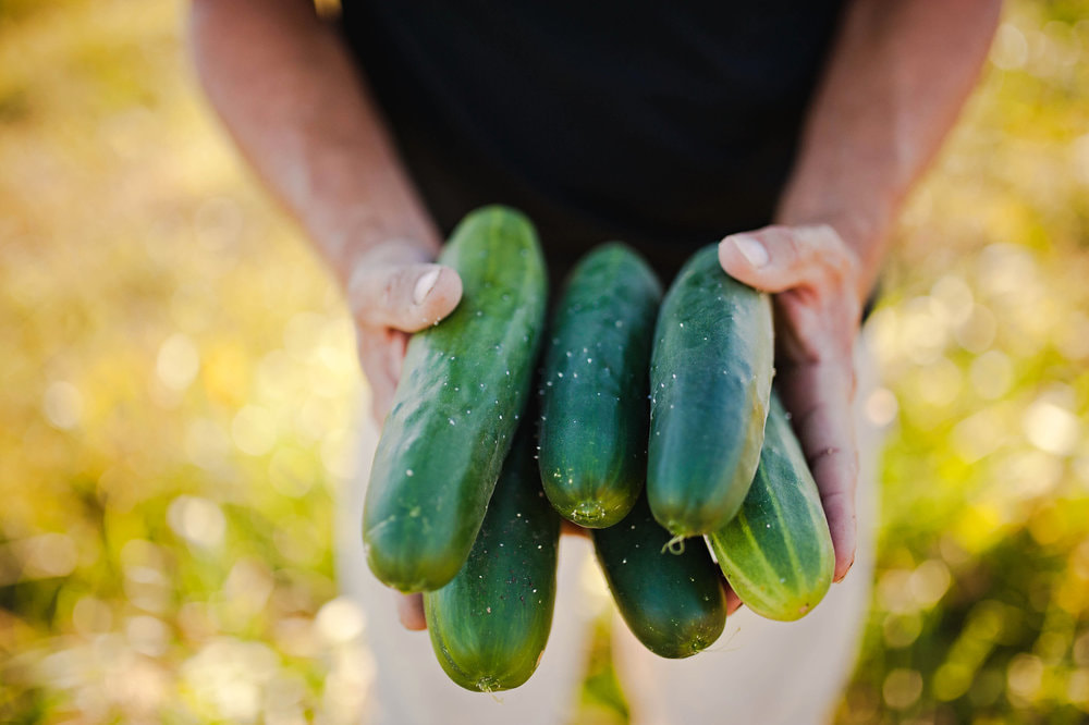 Cartermere Farms Fresh Cucumbers