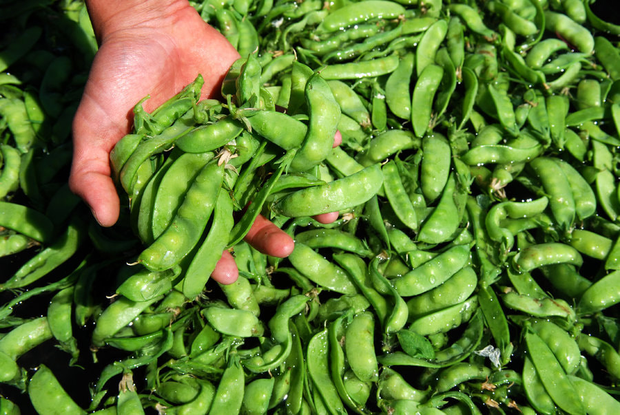 Cartermere Farms Peas
