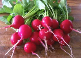 Radishes Cartermere Farms